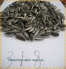 Best Sunflower Seeds 318