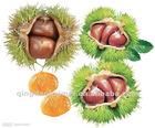 Chinese fresh raw chestnuts