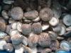 Quick Frozen shiitake mushroom(IQF)