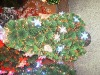 Xmas Garland & Artificial Flowers