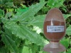 Epimedium brevicornum powder