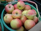 organic gala apple