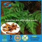 Gu Sui Bu Chinese Herb Medicine for Activating Blood