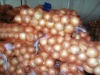 New crop orangic onion