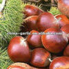 Taian Fresh Chestnuts from China (40-50Piece/KG)
