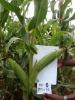 Biological organic fertilizer