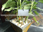 Made in China plants/Flower name board in slate material