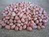 2011 Crop Chinese Round Peanut Good Quality