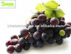 Hot Sale 95% OPC Organic Grape Seed Extract