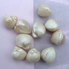 20mm shell accessory | fashion shell pendant