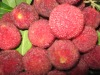 Chinese Fresh Red Bayberry