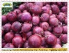7-10cm 2012 New Crop Shandong Fresh red onion