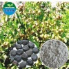Pure Natual Griffonia Seed Extract /5-hydroxytryptophan