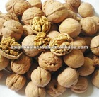 Dry walnut,delicious walnut,all kinds of walnut,good quality and natural