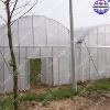 Muti-span Greenhouse