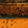 Best price!100% Pure bee pollen