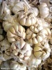 Chinese white fresh garlic