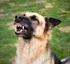 Ultrasonic dog repellent