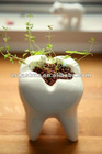resin tooth 0613 Dental Clinic craft souvenir and gifts decor world tooth day
