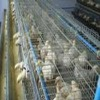 High -quality Laying Chicken Cage