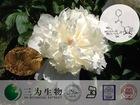 White Peony root Extract, Paeonia extract, 5-80% Paeoniflorin