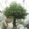 GNW 4 meter large artificial banyan tree