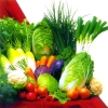 Kinds of Fresh Vegetables of China ,Big Quantity