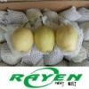 White Su Pear