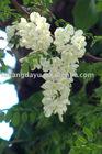 Hot sale china Rutoside CAS NO :153-18-4
