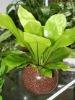 Nutrient sderolite for plant
