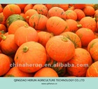 Chinese big pumpkin