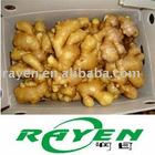Semi Air Dried Ginger