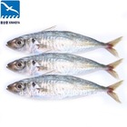 China Sell W/R Jack Mackerel