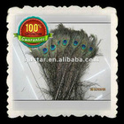 Wholesale 100% naturl Peacock Tail Feather