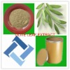 Natural Olive Leaf Extract/plant extract
