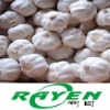 New Crop Chinese Garlic