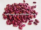 British Type Red Kidney Beans