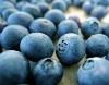 Freshly Blueberry Powder