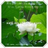 lotus leaf extract of mineral water production plant