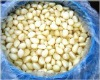 fresh peeled garlic for USA