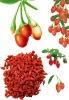 superfine china barbary wolfberry fruit