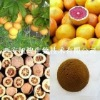 natural fruit Grapefruit Seed Extract powder