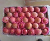 2011 Crop Qinguan Apple