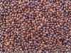 Black Broomcorn Millet in Husk