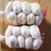 China crops garlic ginger supplier