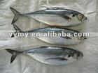 whole frozen sardine high quality
