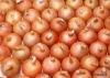 2012 China fresh onions