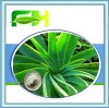 Herbal Medicine Aloe Vera Gel Extract