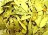 Senna Leaf extract Sennosides