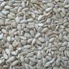good quality sunflower kernels